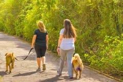 Femmes avec des animaux familiers marchant au parc Image libre de droits
