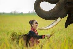 Femmes avec l'éléphant Photo stock