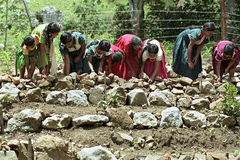 Femmes indiennes construisant des terrasses dans le potager Photographie stock libre de droits