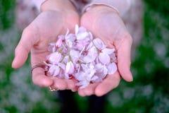Femmes jugeant des fleurs de cerisier disponibles Images libres de droits