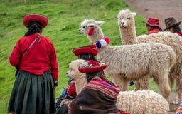 Femmes péruviennes avec l'alpaga près de Cusco, Pérou Photographie stock libre de droits