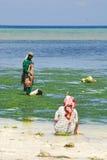 Femmes recherchant des mollusques et crustacés Photo stock