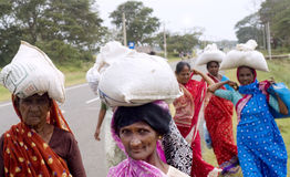 Femmes sri-lankais Images libres de droits