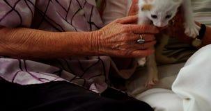 Femmes supérieures frottant le chaton sur le fauteuil à la maison de retraite 4k clips vidéos