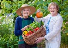 Femmes supérieures montrant des légumes de ferme dans un panier Images libres de droits
