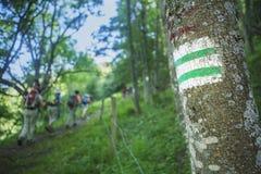 Femmes trimardant dans la forêt Photos libres de droits