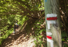 Femmes trimardant dans la forêt Images stock