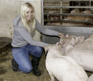 Femmina con i porcellini Immagine Stock