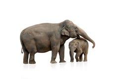 Femmina dell'elefante con il bambino Immagini Stock