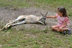 Femmina grigia orientale del canguro Fotografie Stock Libere da Diritti