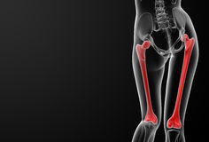 Femur bone Stock Photos