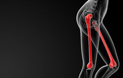 Femur bone Royalty Free Stock Image