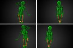 femur bone royalty free illustration