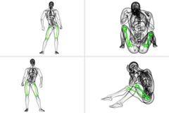 Femur bone. 3d rendering medical illustration of the femur bone Royalty Free Stock Photos
