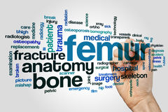 Femur word cloud concept on grey background.  Stock Image