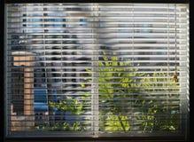 Fenêtre éclaboussée par soleil par les abat-jour blancs Photographie stock libre de droits