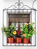 Fenêtre avec des frowerpots Photographie stock libre de droits