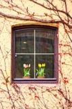 Fenêtre avec des vignes Photographie stock libre de droits