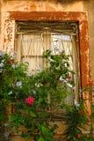 Fenêtre avec la peinture d'épluchage et les vignes fleurissantes Photographie stock libre de droits