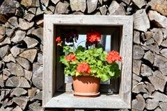 Fenêtre avec le fond et les fleurs en bois Images stock