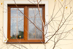 Fenêtre brouillée derrière l'arbre sans feuilles photos libres de droits