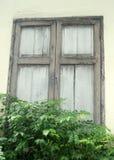 Fenêtre en bois de vieux cottage et barrière de plante verte Photos stock