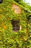 Fenêtre encadrée par la vigne, château d'Orlik Photo libre de droits