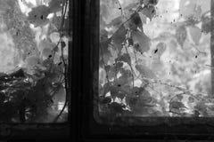 Fenêtre enchantée Photo libre de droits