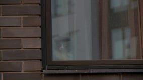 Fenêtre et vidéo de construction à plusiers étages de façade banque de vidéos