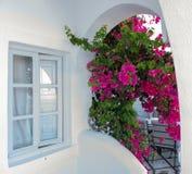 Fenêtre fermée avec les fleurs pourpres de bouganvillée dans la maison de Grec de tradition à l'île de Santorini, Grèce images stock