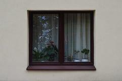 Fenêtre, minimalisme, réflexion, usines Images libres de droits