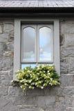 Fenêtre moderne avec des fleurs Photo libre de droits