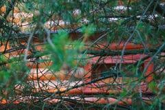 fenêtre par la branche Images libres de droits