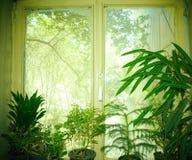 Fenêtre verte Photo libre de droits