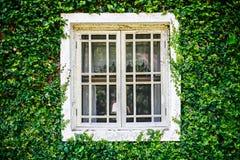 Fenêtre verte de jardin Images libres de droits