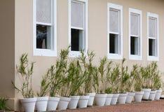 Fenêtres en bois blanches très vieilles Fenêtres et vases alignés Photo libre de droits