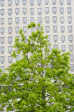 Fenêtres multiples sur un grand immeuble de bureaux Londres Angleterre Europ Photos stock