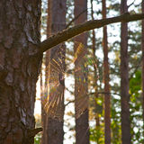 Fenômenos claros na natureza Luz na teia de aranha Fotografia de Stock Royalty Free