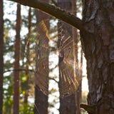 Fenômenos claros na natureza Luz na teia de aranha Fotos de Stock