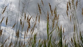Fen grasses stock video footage