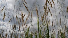 Fen grasses stock video footage