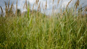 Fen grasses stock footage