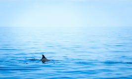 Fena av en haj royaltyfria foton