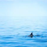 Fena av en haj arkivfoton