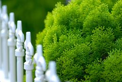 Fence. Green bush and a fence Royalty Free Stock Photography