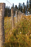 Fence. Through the forest area royalty free stock images