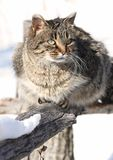 On fence. Cat standing on fence during winter Stock Photos