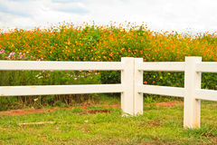 Fence. Cowboy fence on nice green meadow and flower stock photography