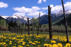Fence. A fence with mountains in the background, yellow daisies on the ground. shallow DOF stock photos