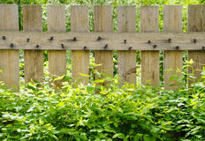 Fence. Wood fence with green leaves Stock Photo